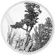 Old Gnarly Tree Round Beach Towel