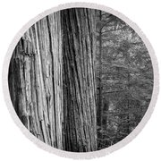 Old Growth Cedars Glacier National Park Bw Round Beach Towel