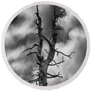 Old Trees Reach For The Sky Round Beach Towel