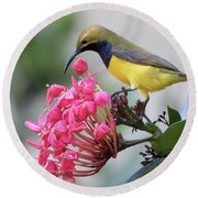 Olive-backed Sunbird Male With Flower Round Beach Towel