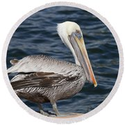 On The Edge - Brown Pelican Round Beach Towel