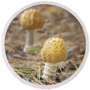 On The Forest Floor Round Beach Towel