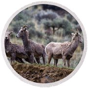 On The Ledge Round Beach Towel by Mike  Dawson