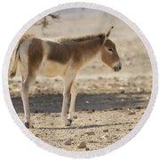 Onager Equus Hemionus Round Beach Towel