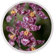 Oncidium Round Beach Towel