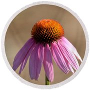 One Coneflower Round Beach Towel