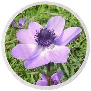 One Delicate Pale Lilac Anemone Coronaria Wild Flower Round Beach Towel