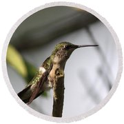 One Out Of Place - Hummingbird Round Beach Towel
