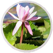 One Pink Water Lily Round Beach Towel
