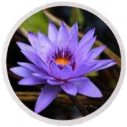 One Purple Water Lily Round Beach Towel by Carol Groenen