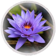 One Purple Water Lily With Vignette Round Beach Towel