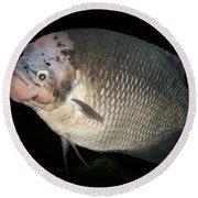One Strange Fish Round Beach Towel