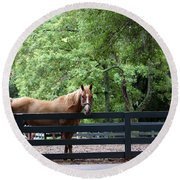 One Very Pretty Hilton Head Island Horse Round Beach Towel