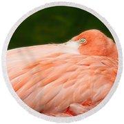 Flamingo With An Open Eye Round Beach Towel