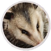 Opossum Round Beach Towel