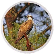 Opulent Osprey Round Beach Towel by Al Powell Photography USA