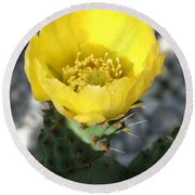 Opuntia Ficus-indica Flower Of The Prickly Pear Round Beach Towel