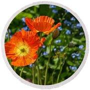 Orange And Blue - Beautiful Spring Orange Poppy Flowers In Bloom. Round Beach Towel