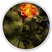 Orange And Yellow Rose Round Beach Towel