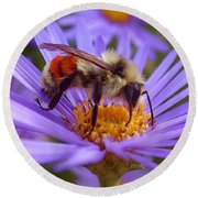 Orange-banded Bee Round Beach Towel