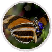 Orange Banded Butterfly Round Beach Towel