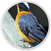 Orange Breasted Bird Portrait Round Beach Towel