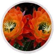 Orange Cactus Flowers Round Beach Towel