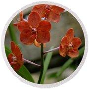 Orange Colored Orchid Round Beach Towel