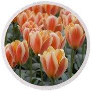 Orange Dutch Tulips Round Beach Towel