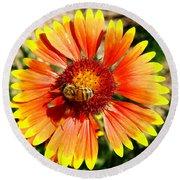Orange Fiery Gaillardia Flower And Bee Macro Round Beach Towel