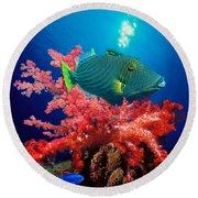 Orange-lined Triggerfish Balistapus Round Beach Towel