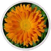 Orange Marigold Close Up With Garden Background Round Beach Towel
