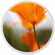 Orange Poppy In Sunlight Round Beach Towel