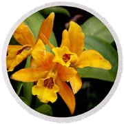 Orange Spotted Lip Cattleya Orchid Round Beach Towel by Rudy Umans