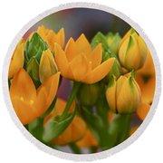 Orange Stars - Floral - Ornithogalum Dubium - Sun Stars Round Beach Towel