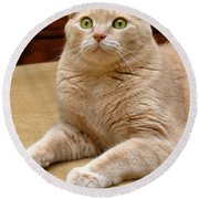Orange Tabby Cat Round Beach Towel
