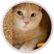 Orange Tabby Cat In Cat Condo Round Beach Towel