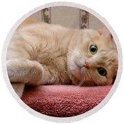Orange Tabby Cat Lying Down Round Beach Towel