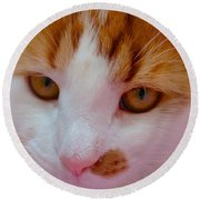 Orange Tabby Kitten Round Beach Towel