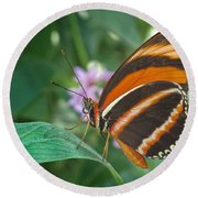 Orange Tiger Or Banded Orange Butterfly Round Beach Towel
