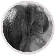 Orangutan Black And White Round Beach Towel