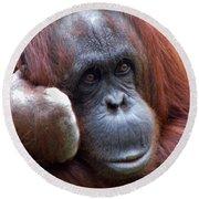 Orangutan Portrait Round Beach Towel