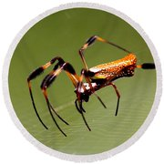 Orb Weaver - Coastal Spider Round Beach Towel