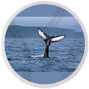 Orca Bitemarks On Humpback Tail Round Beach Towel