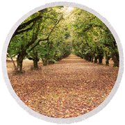 Orchard In The Morning Round Beach Towel
