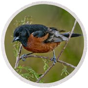 Orchard Oriole Round Beach Towel