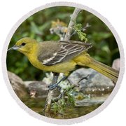 Orchard Oriole Female Round Beach Towel