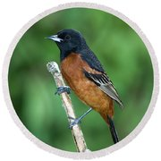 Orchard Oriole Icterus Spurius Adult Round Beach Towel