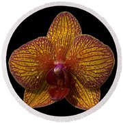 Orchid 16 Round Beach Towel