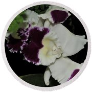orchid 220 Cattleya Moscombe 'The King'  2 of 3 Round Beach Towel